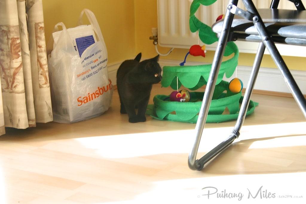 Little Bella Kitten