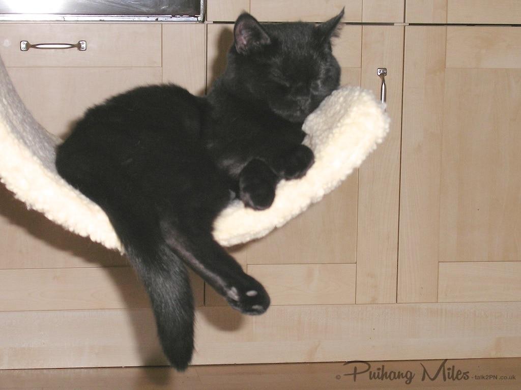 Sleepy Bella Kitten