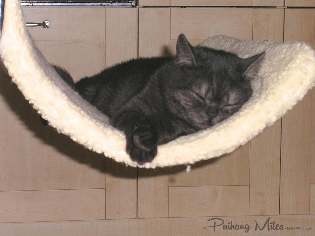 Sleepy Cindy Kitten